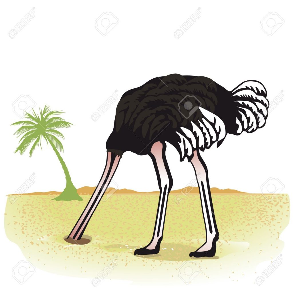 20554122-Ostrich-hides-its-head-in-the-sand-Stock-Photo