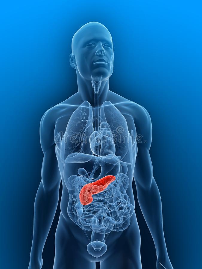 highlighted-pancreas-10244605
