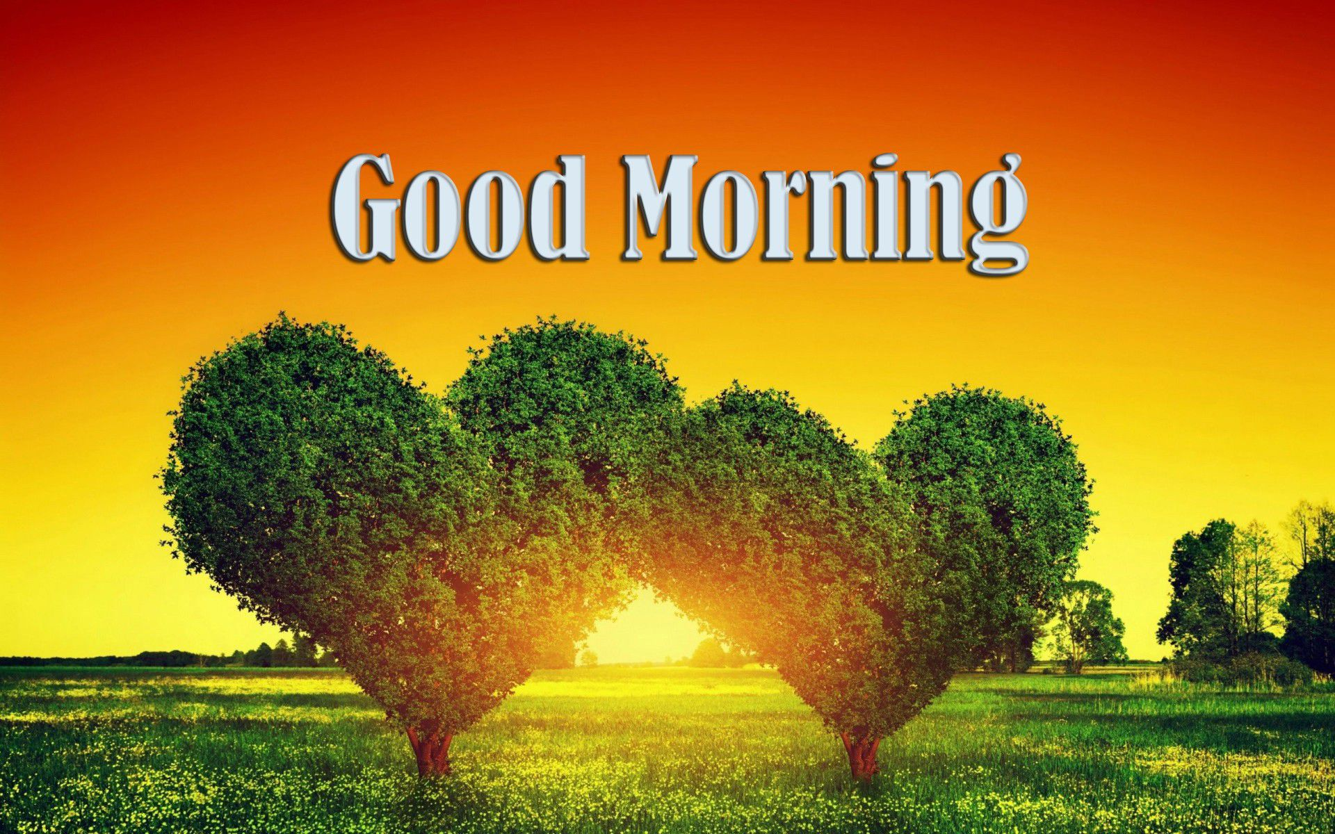good-morning-heart-shape-tree-wallpaper-free-download